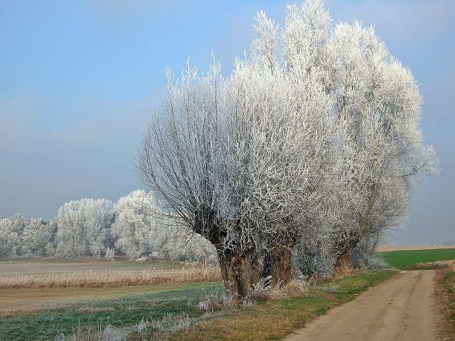 zima, szron, biel, drzewa