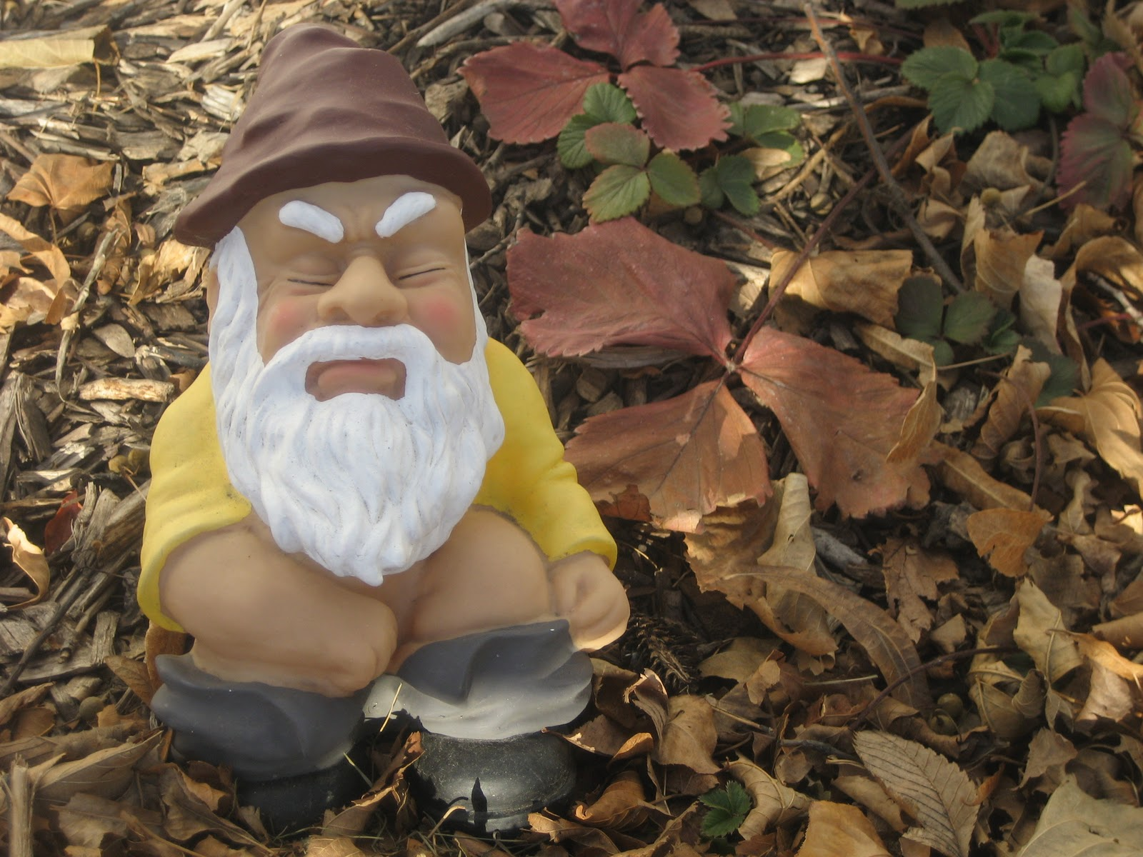 Gnome In Garden: Deaf Dogs And Benevolent Gnomes: Garden Gnome Hibernation