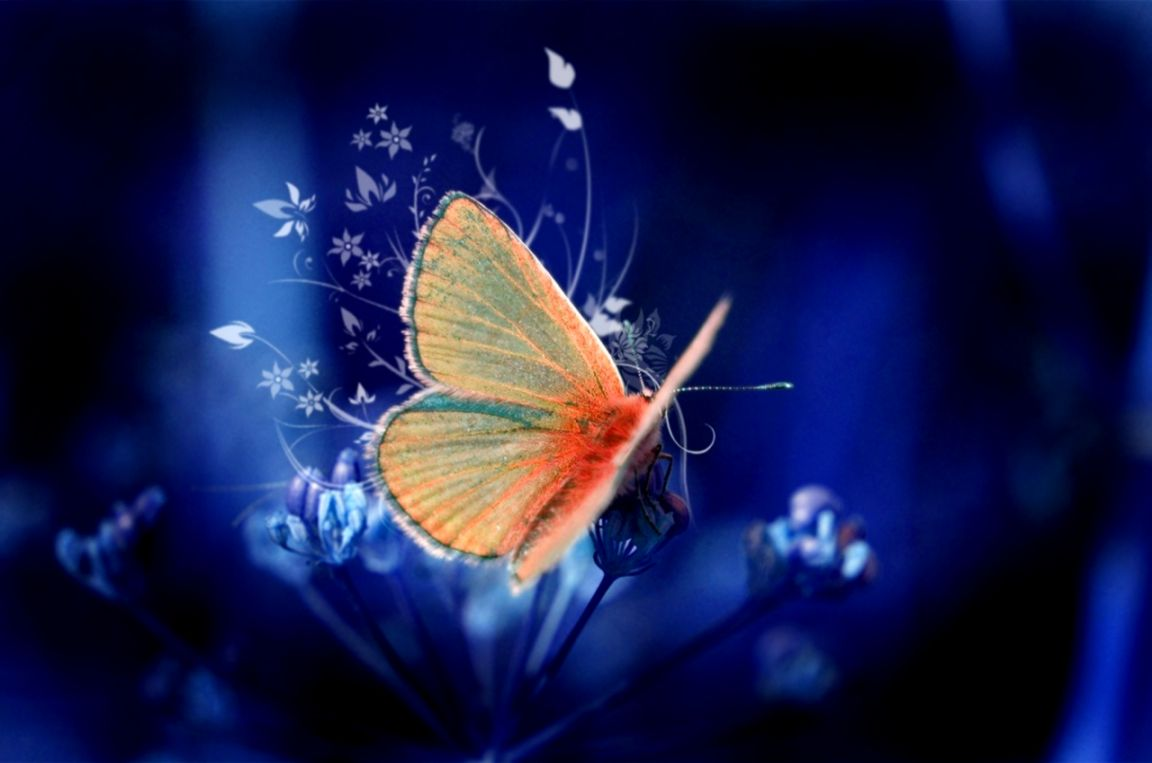 Butterflies Two Hd Wallpaper Root Wallpapers