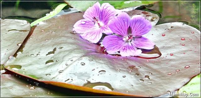 mưa Thu rơi trên lá