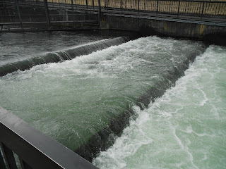 fish ladder at bonneville dam oregon