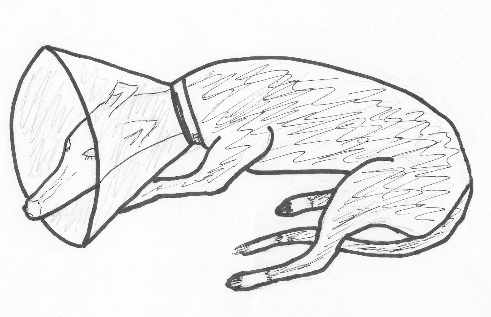 Greyhound Roo