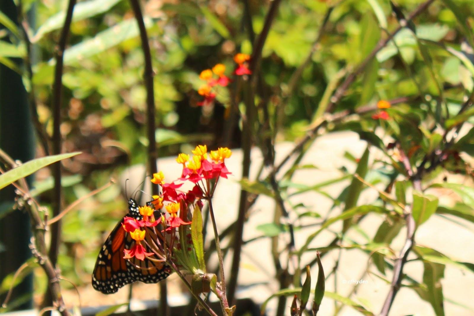 pollinator habitat native plants usda hardiness zone 10 southern california