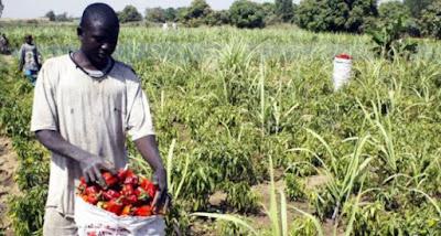 Herdsmen destroy Unilorin's multimillion naira research farms