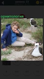 Женщина на земле, рядом альбатрос, изучение орнитология