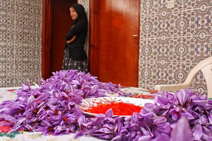 Marocco. L'oro rosso non fa la felicità
