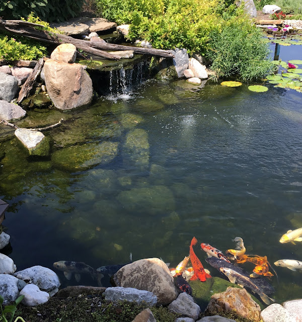 aerator in koi pond