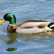Lessons from Ducks to a Teacher