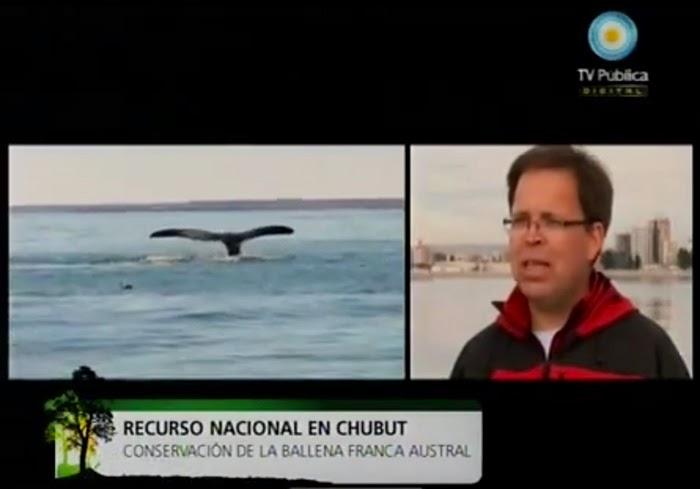 Interacción entre ballenas y embarcaciones en la Bahía Nueva de Península Valdés