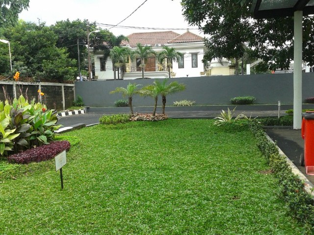 rumput hiasan taman