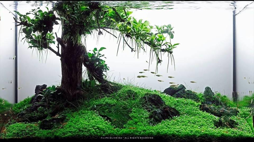 hồ thủy sinh bon sai chơi cây trầu bà