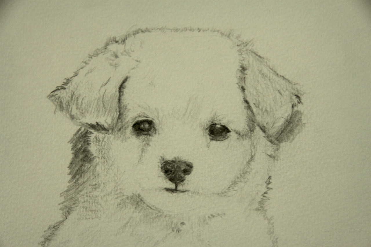Cute dog drawings - photo#55