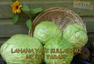 lahana yağı