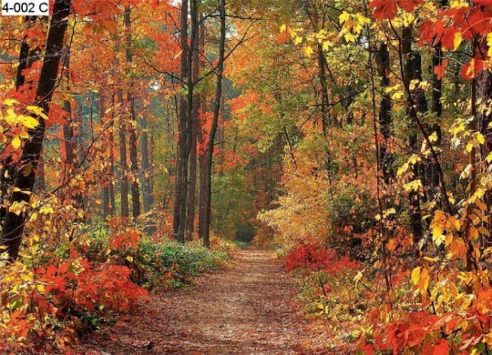Autumn Graphics Picture: Autumn Forest Wall Mural