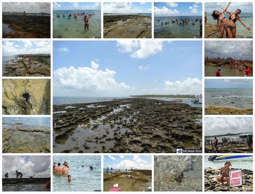 Piscinas naturais - o que fazer na Praia de Carneiros (Pernambuco)