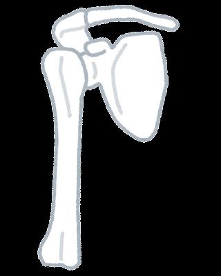 肩の関節のイラスト