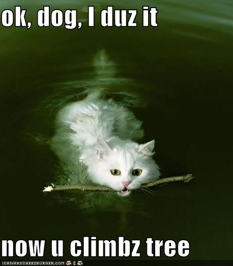 Funny Image Collection: Funny cat pictures with quotes ...