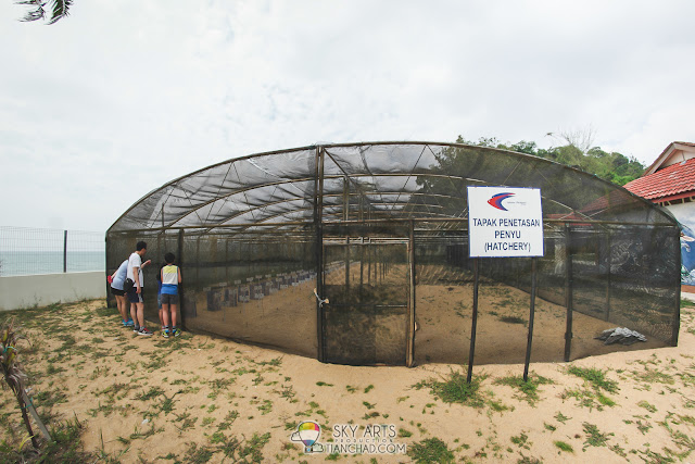 Turtle Hatchery at the Turtle Sanctuary in Kuantan