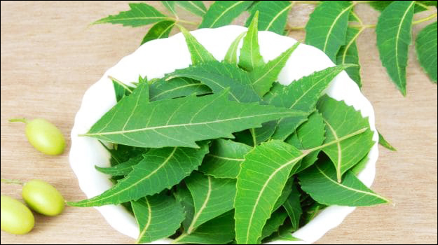 48 Amazing Benefits & Uses of Neem (Azadirachta indica)