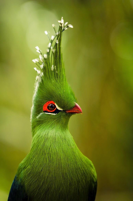 Exotic birds of unprecedented beauty   PHOTOS-0