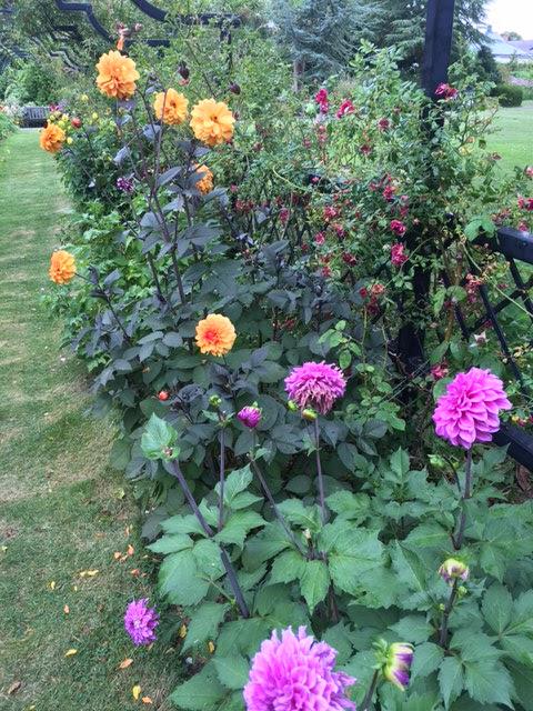 Kgk Gardening Landscape: Sal's Snippets