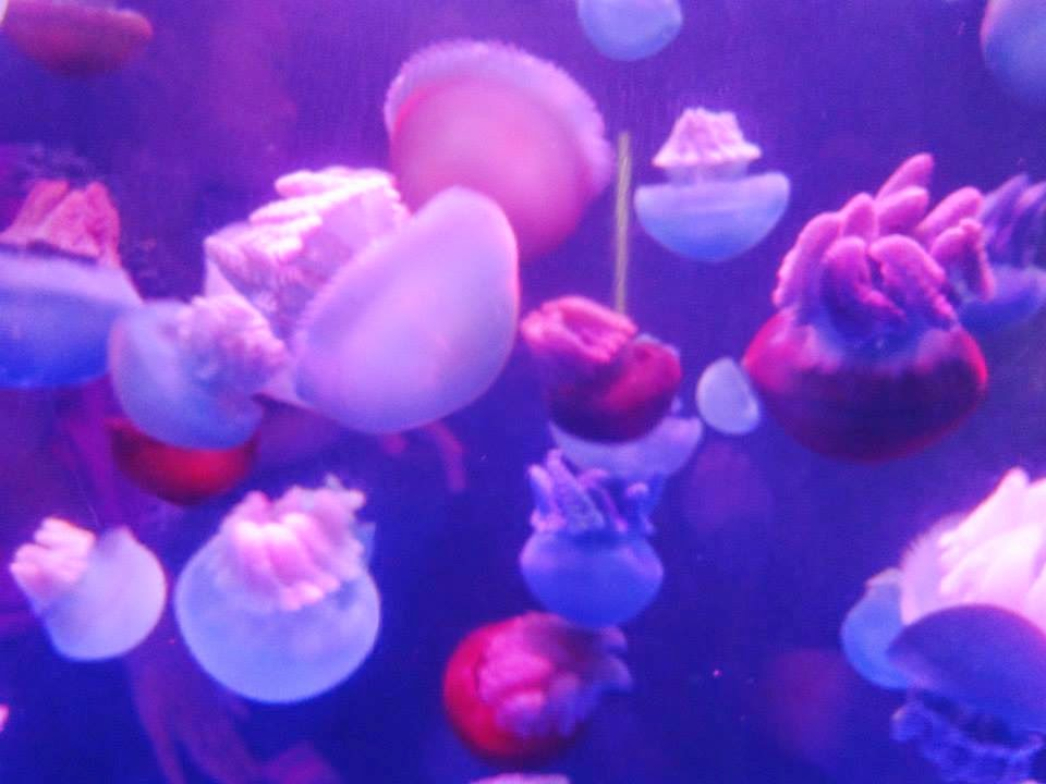 Different-types-Jellyfish-pictures