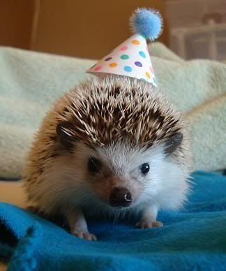 http://3.bp.blogspot.com/-uK085WT59z4/TdoXgHyXdAI/AAAAAAACCus/BF-Ad80_MTk/s400/happy_birthday_animals_01.jpg