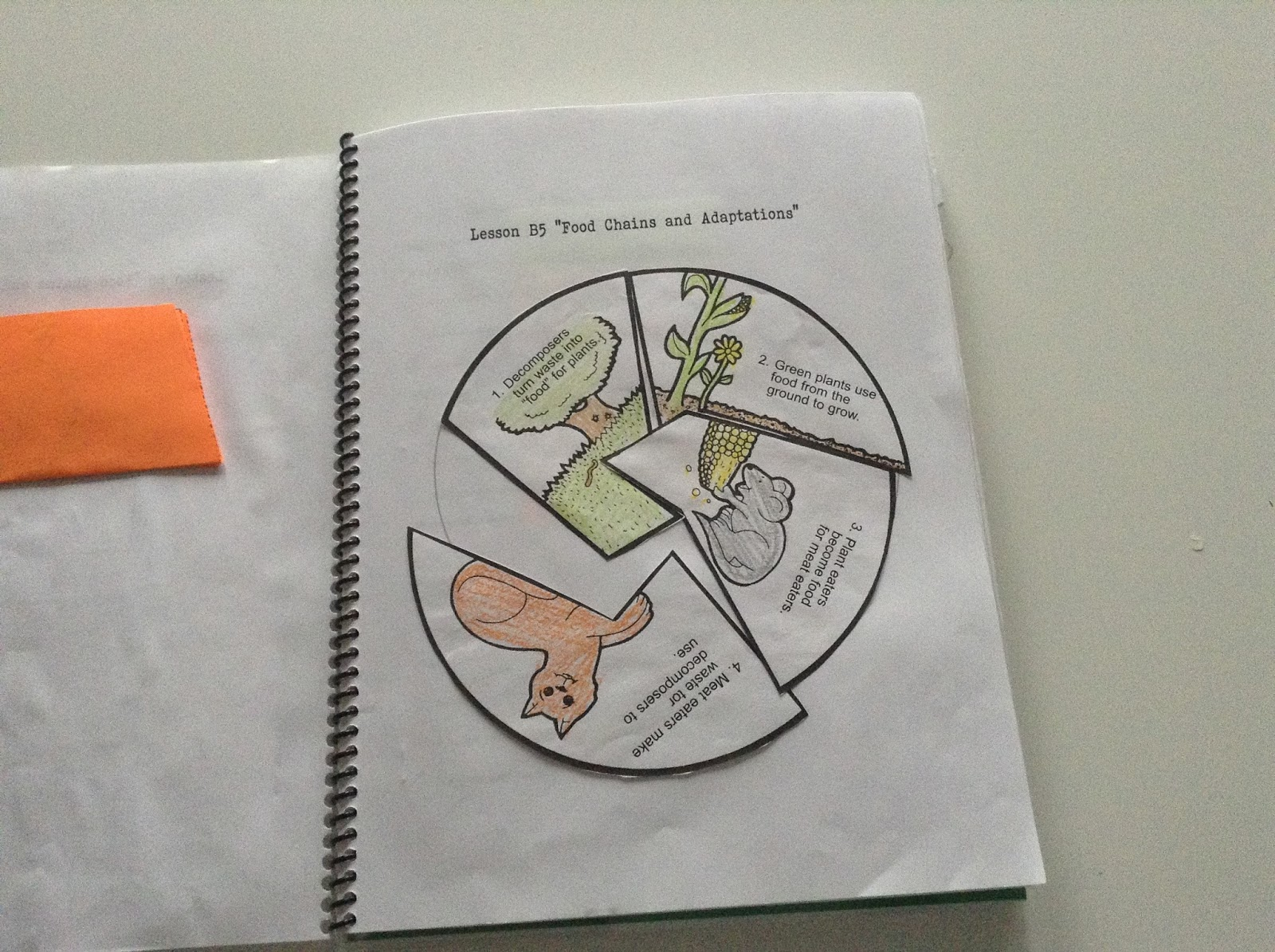 Teachermomplus3 Food Chains And Food Webs