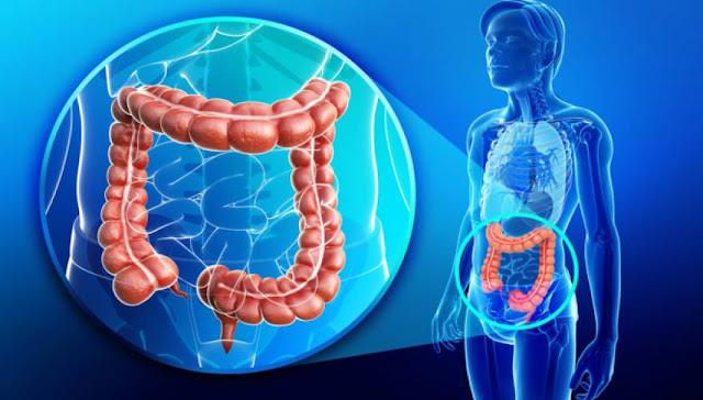 Αμερικανοί επιστήμονες: Το λάδι που καταστρέφει το 90% των καρκινικών κυττάρων στο έντερο (ΒΙΝΤΕΟ)