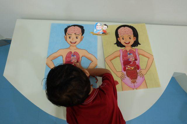 belajar anggota tubuh untuk tk