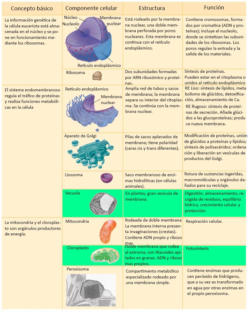 Calderon Blogo Ciencia 3 Tema 3 Organización Del Cuerpo Humano