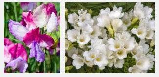 Arti Mimpi Bunga Anggrek Harum Semerbak