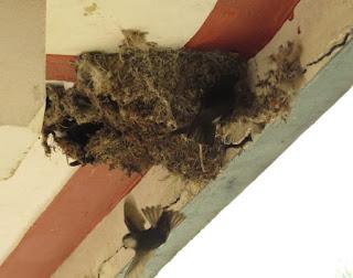 House Swift
