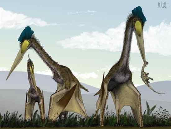 300 Gambar Dinosaurus Sebenar HD Paling Baru