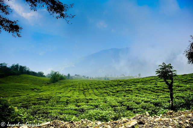 Temi Tea Garden_DoiBedouin