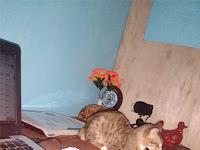 Hobi Memelihara Kucing