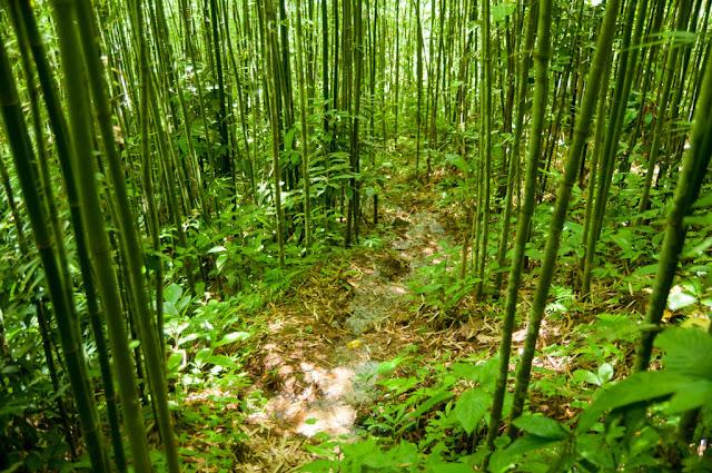 Bambú Sapa