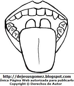Dibujo de la lengua del cuerpo humano (Vista Superior) para colorear pintar e imprimir. Dibujo de la lengua hecho por Jesus Gómez