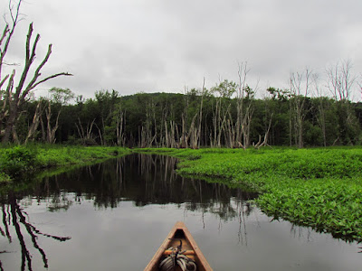 The View From The Canoe
