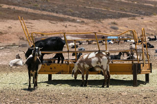 Las Casitas-Fuerteventura