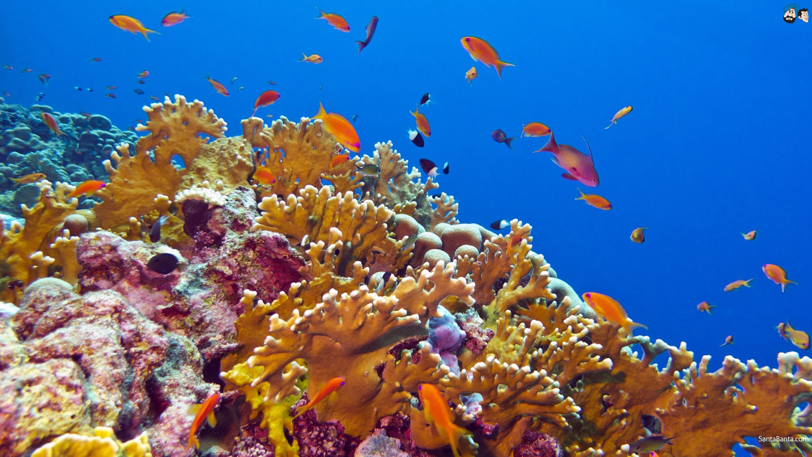 Coral Reef Wallpaper Hd Aquatic Hd Wallpapers Most Beautiful Places In The World