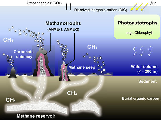 Penelitian Insight Into Anaerobic Methanotrophy from 13C12C- Amino Acids and 14C12C-ANME Cells in Seafloor Microbial Ecology