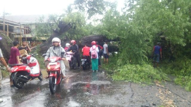 Tutupi Jalan, Pohon Tumbang Macetkan Jalan Poros Soppeng- Sidrap