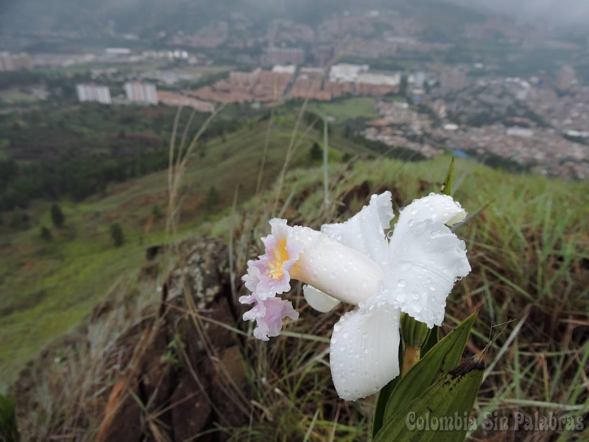 orquideas en el cerro quitasol