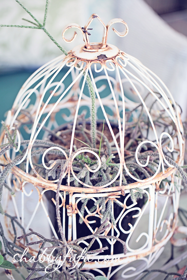 succulent display vintage birdcage