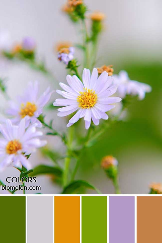 paletas_de_colores_22_novedades_en_colores_7