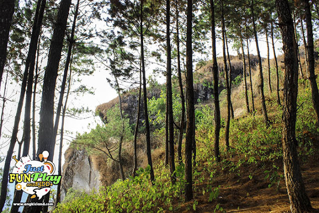 hutan pinus watu putih