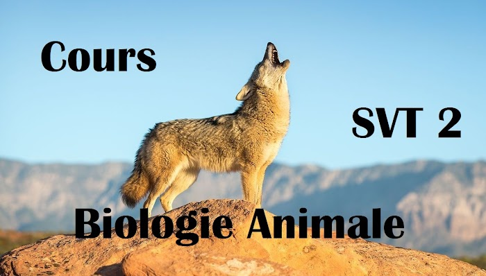 Cours de Biologie Animales SVT Semestre S2 PDF
