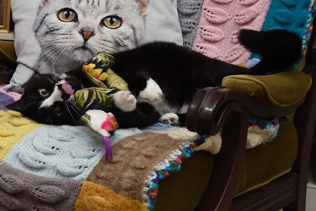 catnip, catnip kicker, catnip responder, cat