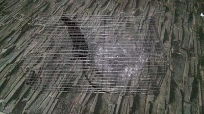 Cara Mengusir Tikus atau Membasmi Tikus Dari Rumah atau Cara Efektif Mengusir Tikus Secara Alami